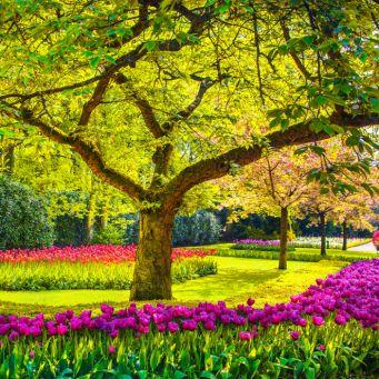 rostliny-a-stromy.jpg