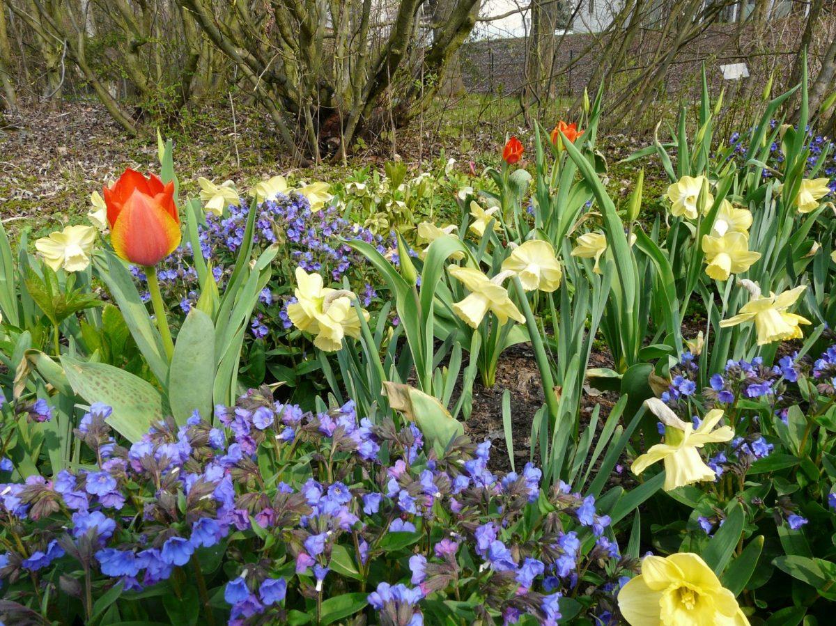 Cibuloviny dodají každé zahradě barvy anevšední atmosféru.