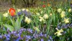 cibuloviny-dodaji-kazde-zahrade-barvy-a-nevsedni-atmosferu.-144x81.jpg