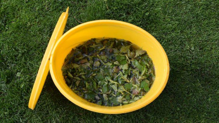 dnes-jsou-oblibene-bylinne-jichy-ty-ovsem-aplikujte-az-v-prubehu-pestovani-aby-nedochazelo-ke-ztrate-zivin.-728x409.jpg