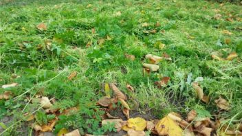 posecene-zelene-hnojeni-staci-do-pudy-jen-povrchove-zapravit.-352x198.jpg