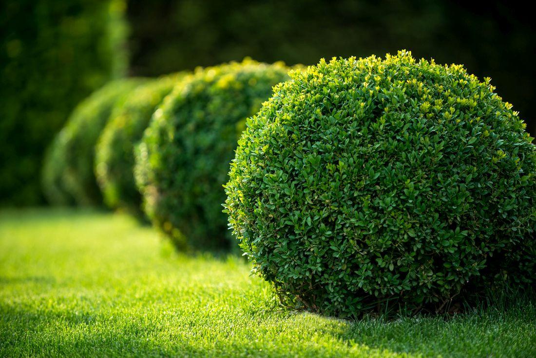 Okrasné keře na vaši zahradu