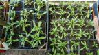 vysevem-ziskate-male-rostliny-ktere-ale-brzy-zesili-a-jiz-prvni-sezonu-se-muzete-tesit-na-sklizen.-144x81.jpg