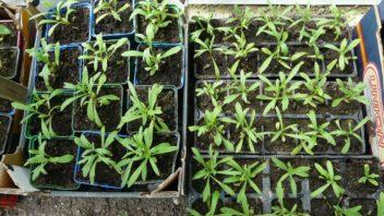 vysevem-ziskate-male-rostliny-ktere-ale-brzy-zesili-a-jiz-prvni-sezonu-se-muzete-tesit-na-sklizen.-352x198.jpg