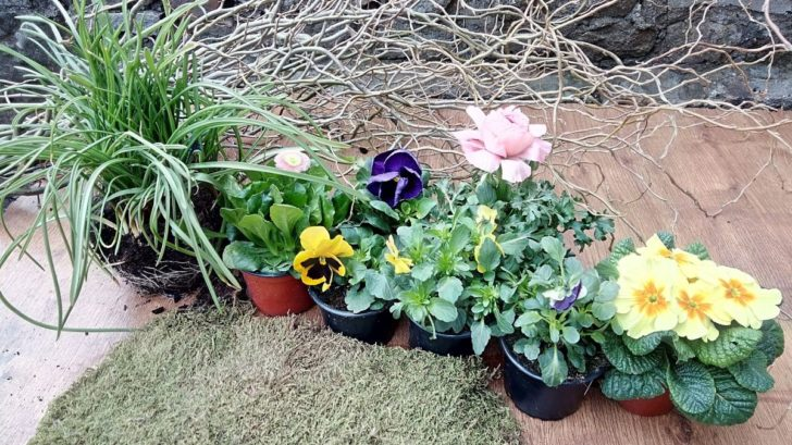 06_rostlinny-material-ktery-budeme-potrebovat-728x409.jpg