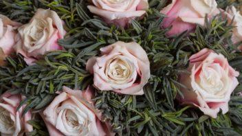 balzamovane-kvetiny-352x198.jpg