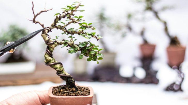 bonsai_shutterstock_779074561-728x409.jpg