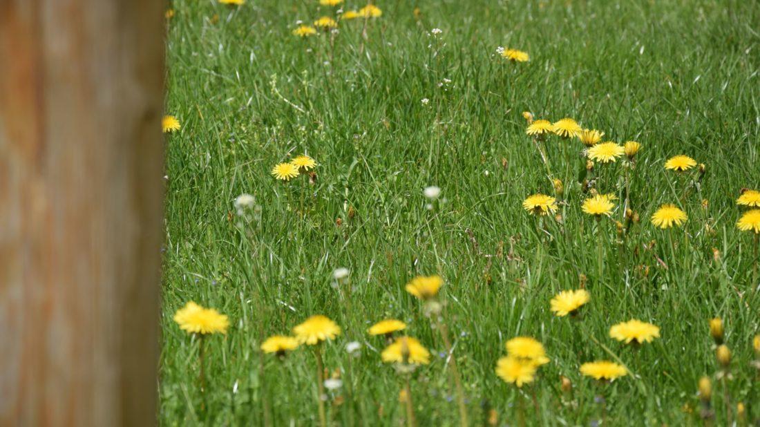 bylinny-travnik-je-cim-dal-tim-vice-oblibeny-pro-svou-nenarocnost-1100x618.jpg