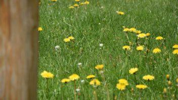 bylinny-travnik-je-cim-dal-tim-vice-oblibeny-pro-svou-nenarocnost-352x198.jpg