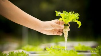 hydroponicke-pestovani_shutterstock_679583512-352x198.jpg