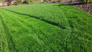 i-z-okrasneho-travniku-je-pri-seci-posecene-travy-opravdu-hodne-352x198.jpg