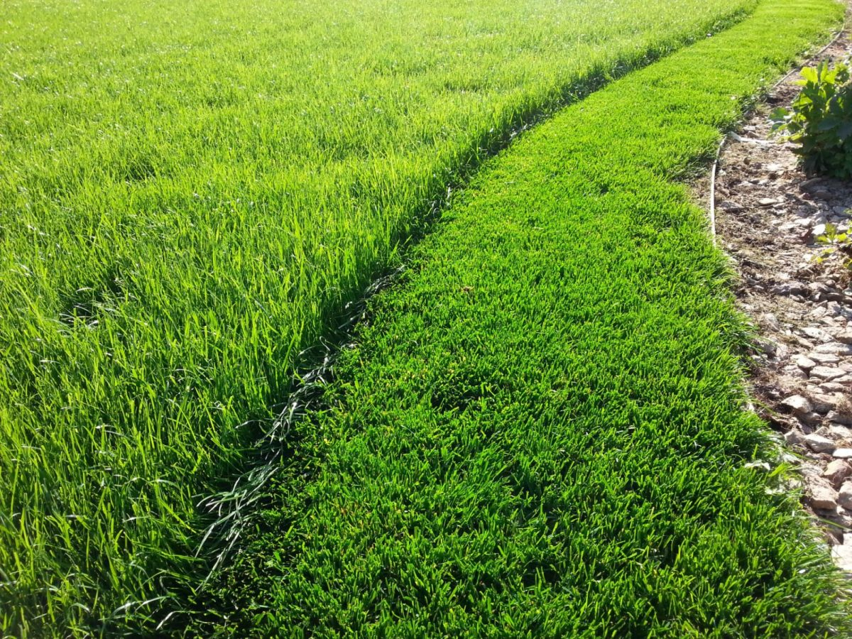 intenzivni-travnik-vyzaduje-pravidelnou-sec-1200x1200.jpg
