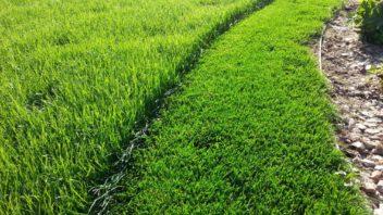 intenzivni-travnik-vyzaduje-pravidelnou-sec-352x198.jpg