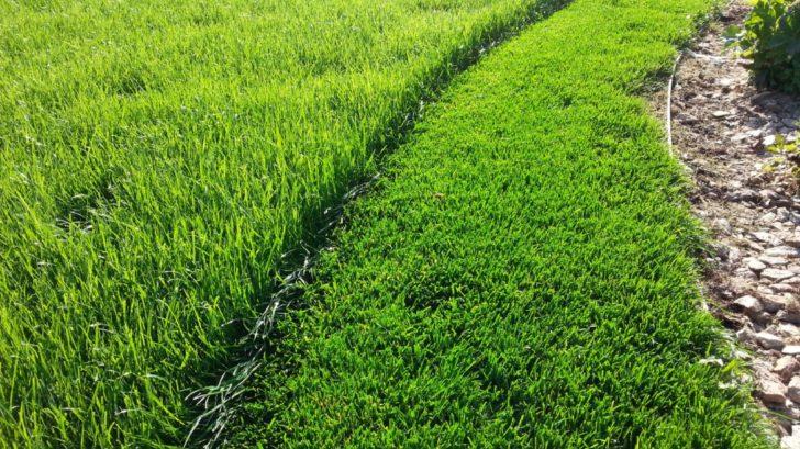 intenzivni-travnik-vyzaduje-pravidelnou-sec-728x409.jpg