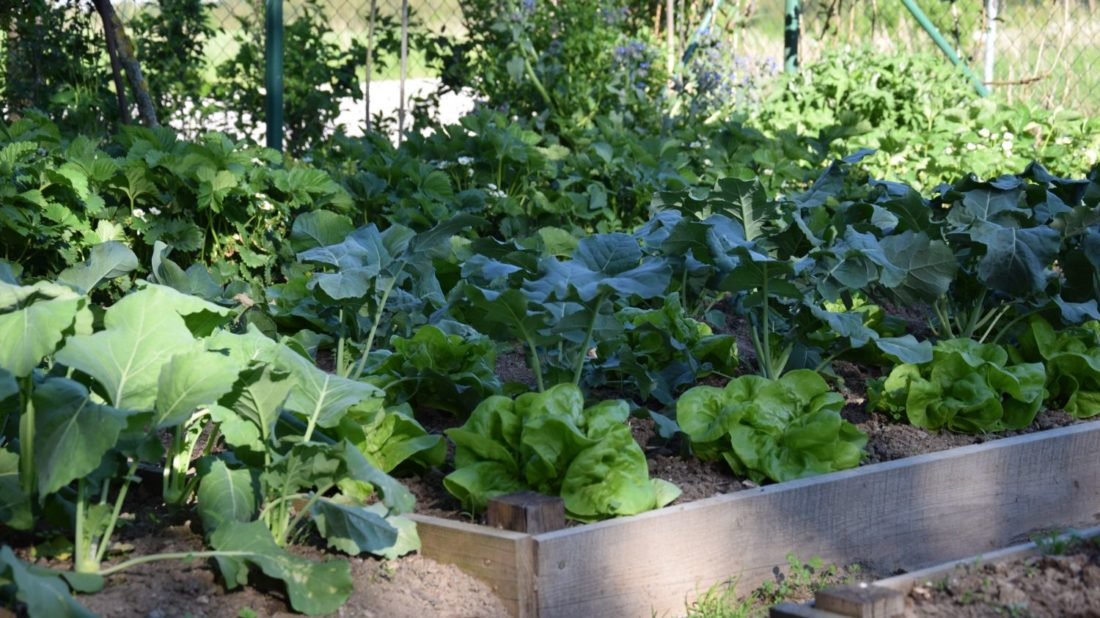 intenzivnim-pestovanim-zeleniny-muzme-pudu-casem-poskodit-je-tedy-treba-o-ni-peclive-pecovat-a-dodavat-do-ni-potrebne-latky-1100x618.jpg