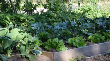 intenzivnim-pestovanim-zeleniny-muzme-pudu-casem-poskodit-je-tedy-treba-o-ni-peclive-pecovat-a-dodavat-do-ni-potrebne-latky-352x198.jpg
