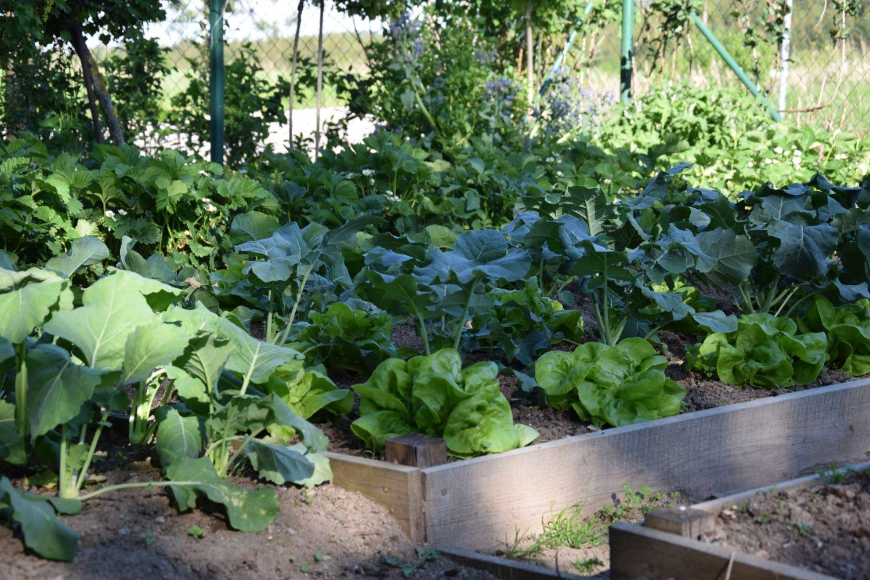 intenzivnim-pestovanim-zeleniny-muzme-pudu-casem-poskodit-je-tedy-treba-o-ni-peclive-pecovat-a-dodavat-do-ni-potrebne-latky.jpg