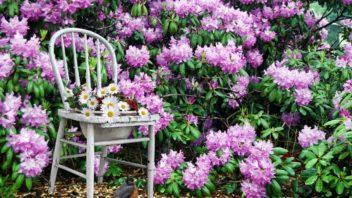 kvetinac-ze-zidle_shutterstock_13796134-352x198.jpg