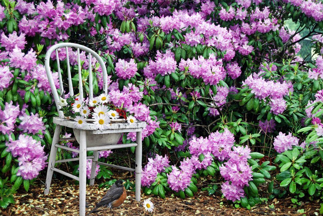 květináč ze židle_shutterstock_13796134