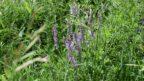 kvetnata-louka-je-idealnim-resenim-predevsim-pro-vetsi-pozemky-144x81.jpg