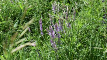 kvetnata-louka-je-idealnim-resenim-predevsim-pro-vetsi-pozemky-352x198.jpg