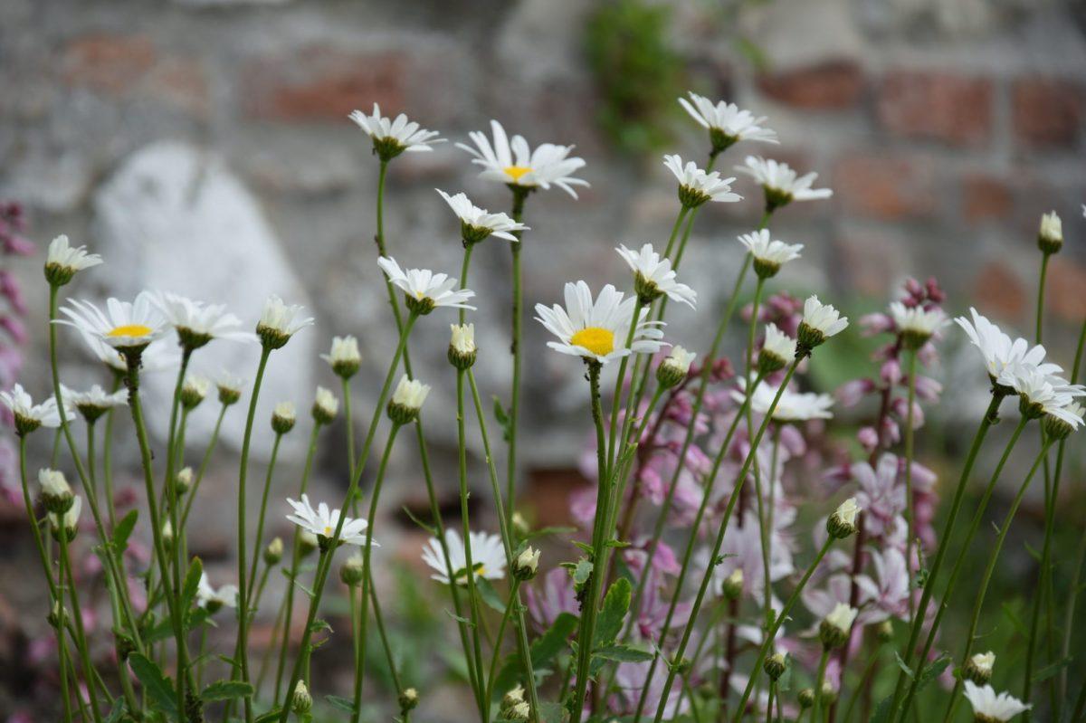 kvetnata-louka-znacne-snizuje-potrebu-udrzby-zahrady-1200x1200.jpg