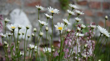 kvetnata-louka-znacne-snizuje-potrebu-udrzby-zahrady-352x198.jpg