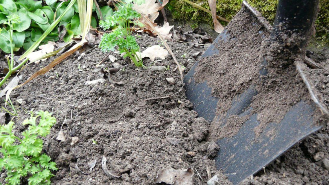 nevyhodou-syntetickych-hnojiv-je-postupne-zasolovani-pudy-ktera-tak-ztraci-drobtovitou-strukturu-1100x618.jpg