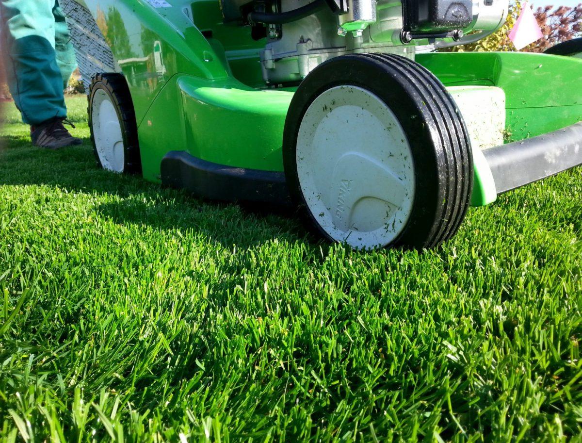 Okrasný trávník je náročný nejen na seč, ale také na hnojení adalší pracné úkony
