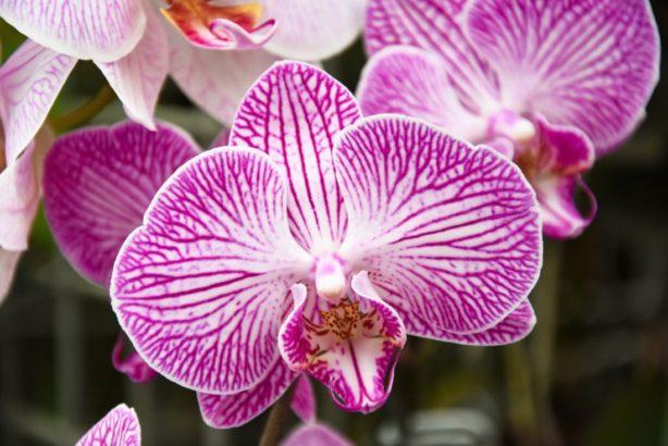 orchidej-614x410.jpg