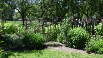 ovocne-stromy-maji-sve-misto-i-v-okrasne-zahrade-kopie-352x198.jpg