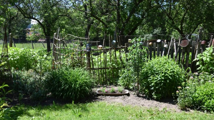 ovocne-stromy-maji-sve-misto-i-v-okrasne-zahrade-kopie-728x409.jpg