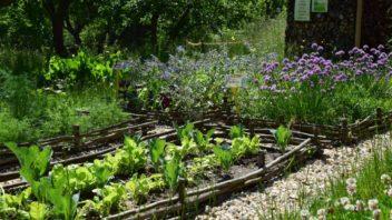 pestovani-zeleniny-si-zefektivnete-vysadbou-specifickych-druhu-rostlin-ktere-jsou-pro-pestovanou-plodinu-urcitym-zpusobem-vyhodne-352x198.jpg