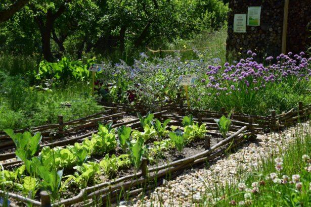 pestovani-zeleniny-si-zefektivnete-vysadbou-specifickych-druhu-rostlin-ktere-jsou-pro-pestovanou-plodinu-urcitym-zpusobem-vyhodne-615x410.jpg