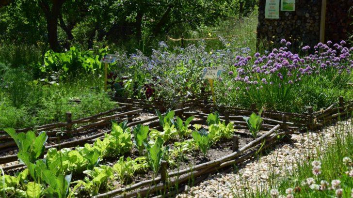 pestovani-zeleniny-si-zefektivnete-vysadbou-specifickych-druhu-rostlin-ktere-jsou-pro-pestovanou-plodinu-urcitym-zpusobem-vyhodne-728x409.jpg