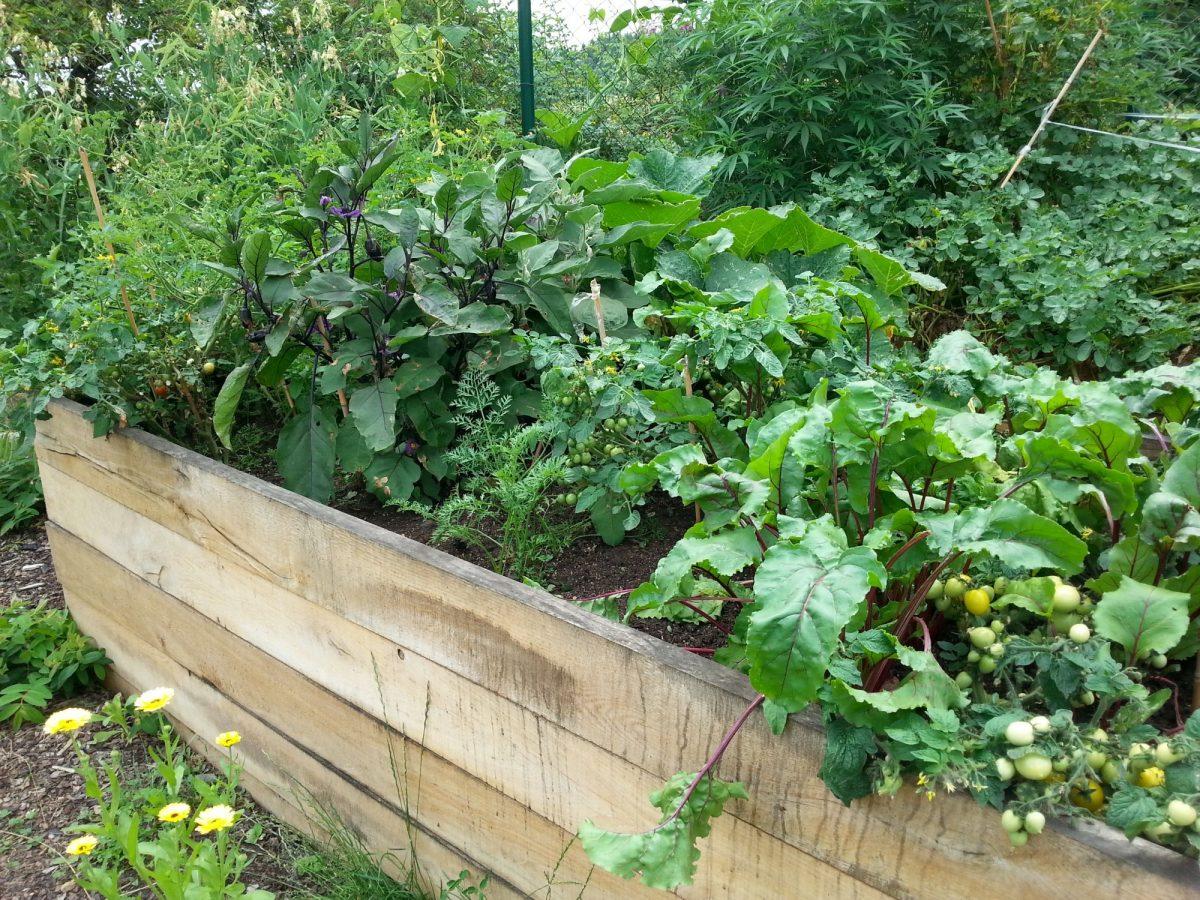 polykulturni-pestovani-je-oblibene-hlavne-v-permakulturni-zahrade-1200x1200.jpg