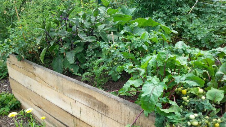 polykulturni-pestovani-je-oblibene-hlavne-v-permakulturni-zahrade-728x409.jpg