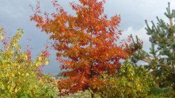 pri-vyberu-dreviny-nezapominjte-na-jeji-pusobnost-i-behem-podzimu-a-zimy-352x198.jpg