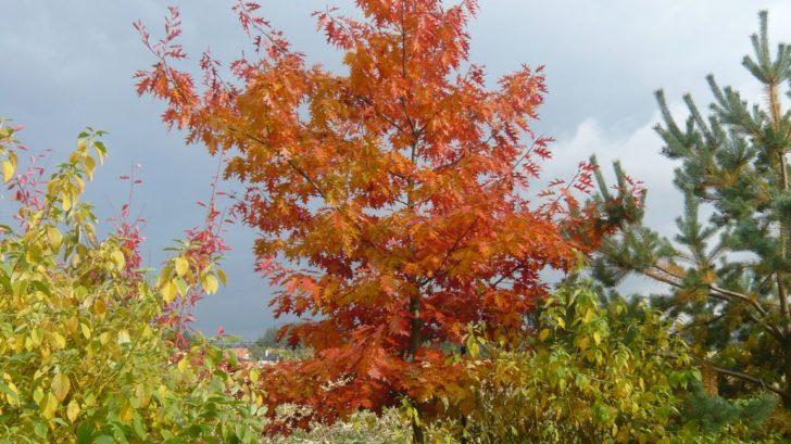 pri-vyberu-dreviny-nezapominjte-na-jeji-pusobnost-i-behem-podzimu-a-zimy-728x409.jpg