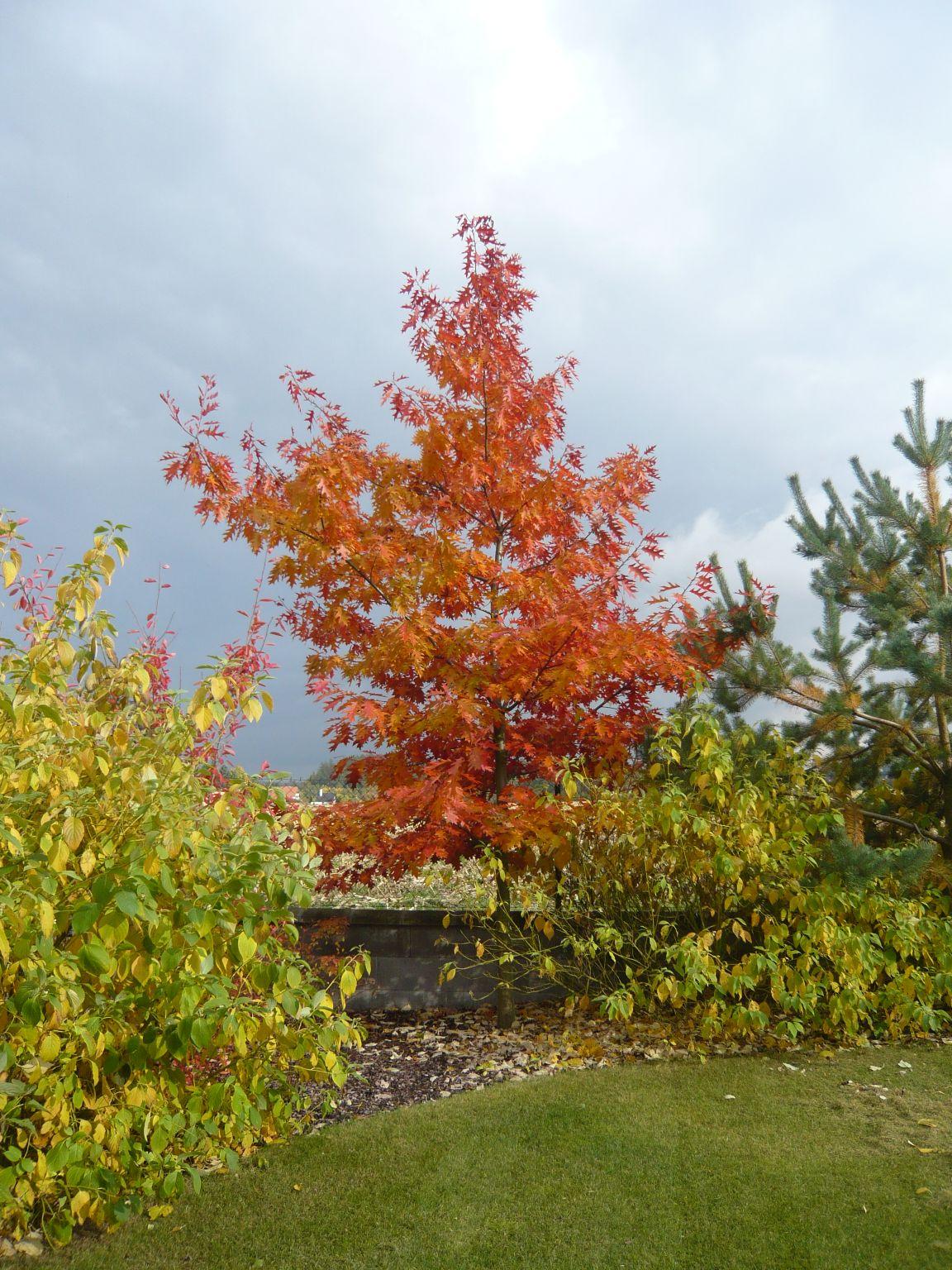 Při výběru dřeviny nezapomínjte na její působnost iběhem podzimu azimy