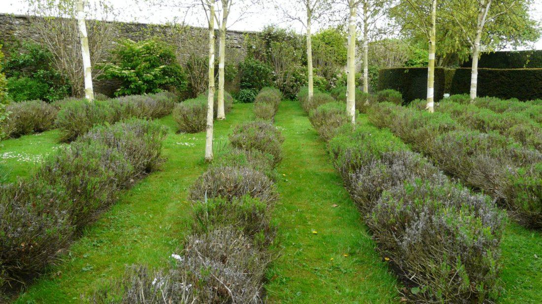 stromy-s-vyraznym-zbarvenim-kmene-a-vetvi-predstavuji-dulezity-prvek-v-celorocne-efektni-zahrade-1100x618.jpg