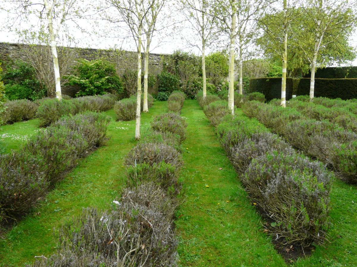 stromy-s-vyraznym-zbarvenim-kmene-a-vetvi-predstavuji-dulezity-prvek-v-celorocne-efektni-zahrade-1200x1200.jpg