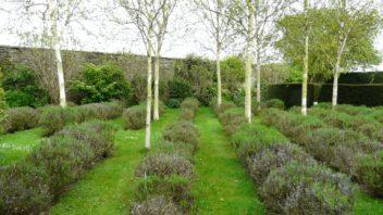 stromy-s-vyraznym-zbarvenim-kmene-a-vetvi-predstavuji-dulezity-prvek-v-celorocne-efektni-zahrade-352x198.jpg