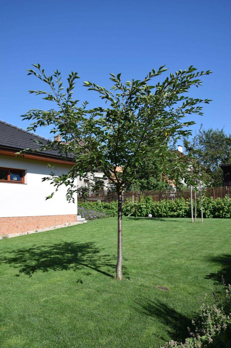 Stromy vtrávníku představují přírodní slunečník