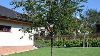 stromy-v-travniku-predstavuji-prirodni-slunecnik-352x198.jpg