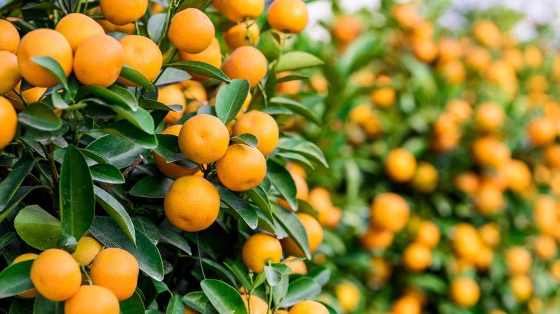 citrus-1100x618.jpg