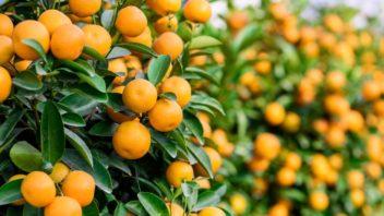 citrus-352x198.jpg