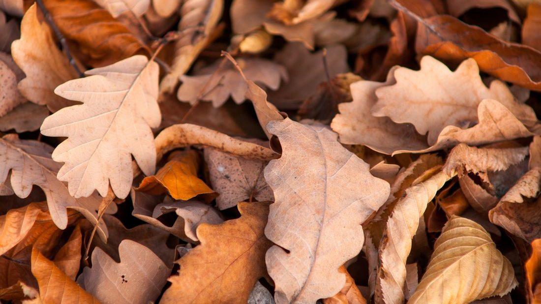 dubovy-list-dubove-listi-podzimni-listi-1100x618.jpg