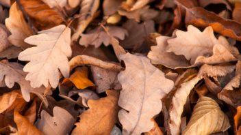 dubovy-list-dubove-listi-podzimni-listi-352x198.jpg