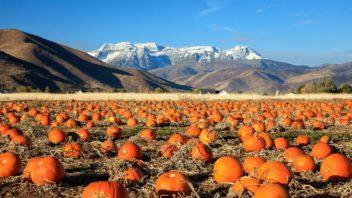 dyne-pumpkins-352x198.jpg